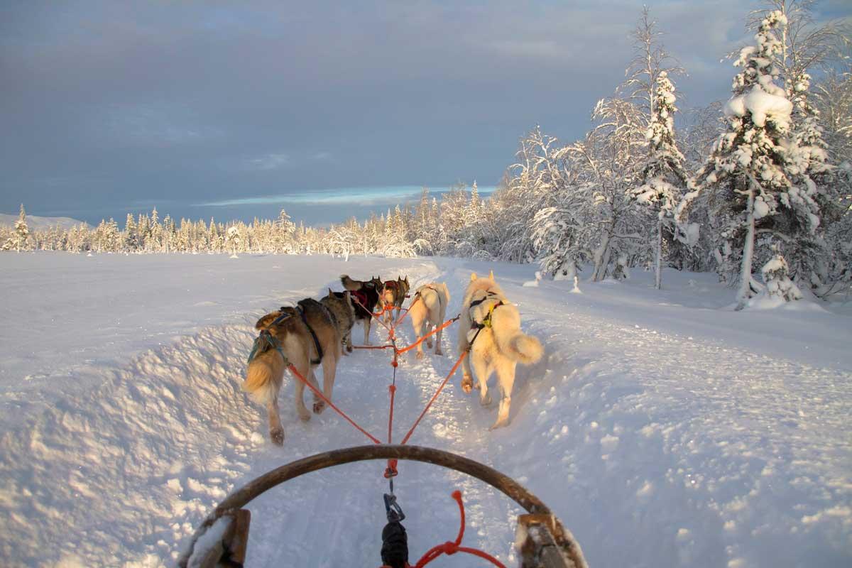 desnowtrips safari en trineo con huskies