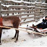 Viaje a Laponia en familia